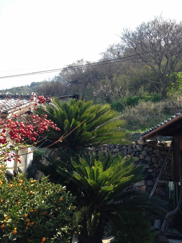 男木島の朝
